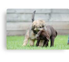 Puppies playing Canvas Print