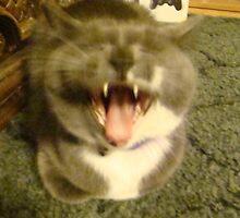 smilin kitty by Dakota Mercer