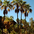 Rare Ancient Red Cabbage Palms,N.T. by Joe Mortelliti