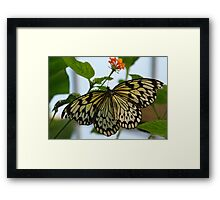 Pretty Lady Framed Print