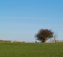 Lonely Hawthorn by WatscapePhoto