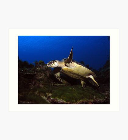 Low Flying Turtle Art Print