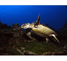 Low Flying Turtle Photographic Print