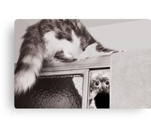 Moments With Max... Canvas Print