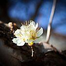 Simple Bloom by SESE