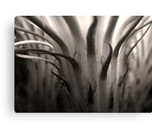Cactus Bloom in Sepia Canvas Print