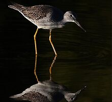 Greater Yellowlegs Reflects by Jim Cumming