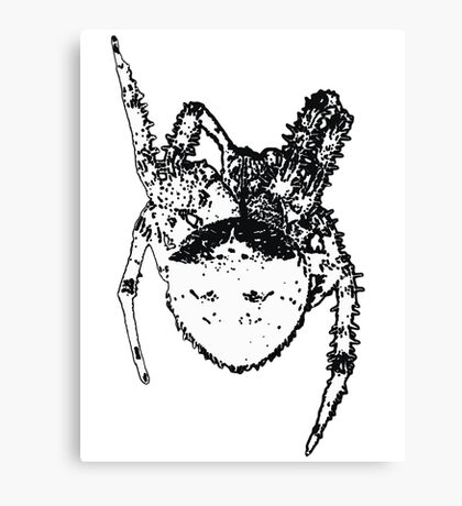 Cat Face Spider  Canvas Print