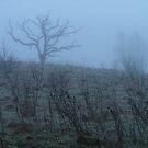 Ghost Tree by Jason Kiely