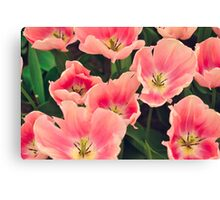 So many pretty pink flowers Canvas Print