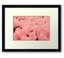 Ocean of pink petals  Framed Print