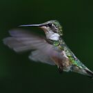 Hummingbird Closeup by Jim Cumming