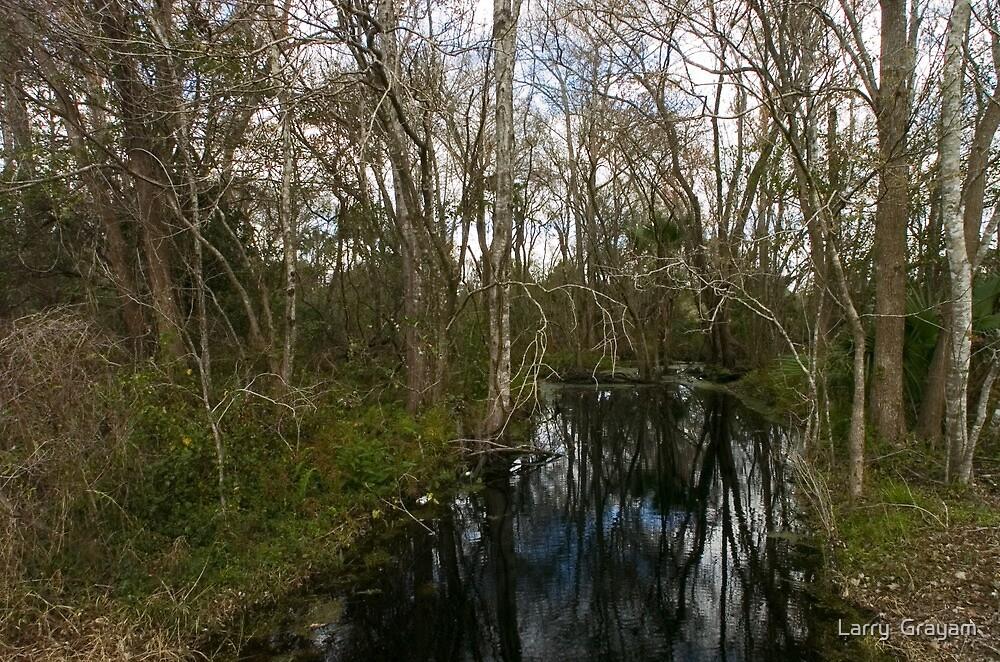 Florida creek by Larry  Grayam