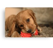 Golden Cocker Spaniel Puppy Canvas Print