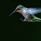Incoming - Hummingbird by Jim Cumming