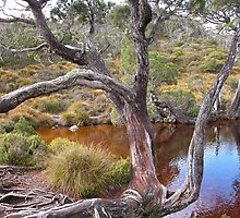 The Wombat Pool, Cradle Mountain, Tasmania, Australia. by kaysharp