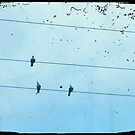 Birds on the Wire by LeedenMoon