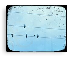 Birds on the Wire Canvas Print