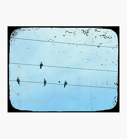 Birds on the Wire Photographic Print