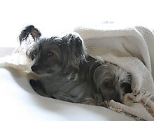 Snuggle Dogs Photographic Print