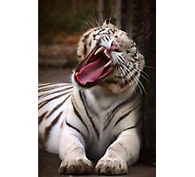 The Big Yawn Photographic Print