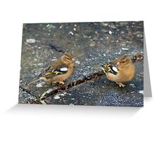 Chatting chaffinches Greeting Card