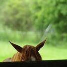 Ear He Is by LeedenMoon