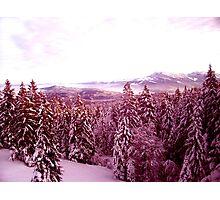 Swiss Delight Photographic Print
