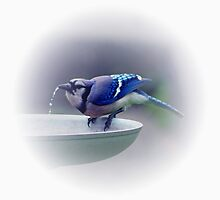 *BLUE JAY DRINKING WATER* by Van Coleman