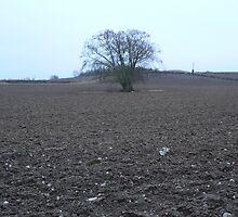 """Old & Alone"" soon to go Green,Kilkenny City,,2km away. by Pat Duggan"