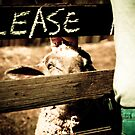 Please...Sheep by SESE