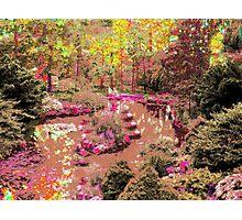 High Park pond!... Photographic Print