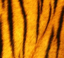 Sumantra Tiger Design Sticker