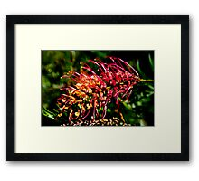 Natural Brush Framed Print
