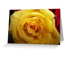 Gifted Yellow Rose Greeting Card