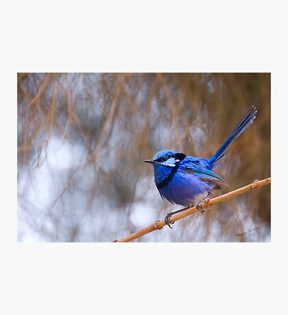 Blue Song Photographic Print