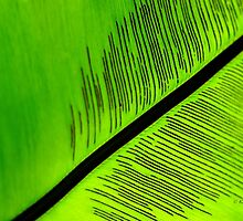 Bright Colored Abstract Palm Tree Leaf by KMRyan