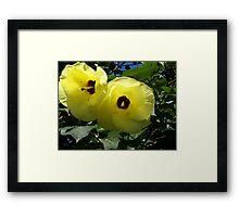 Native Hibiscus Framed Print