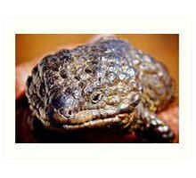 Shingleback Lizard  Art Print