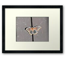Polyphemus Moth (Antheraea polyphemus) Framed Print