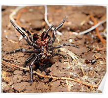 Funnel-web spider Poster