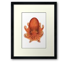 Northern Octopus (Eledone cirrhosa) Framed Print