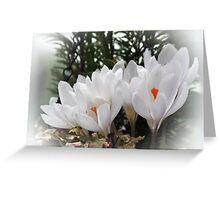 Spring Crocus' Greeting Card