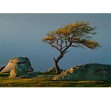 Dog Rocks, Batesford Victoria Photographic Print