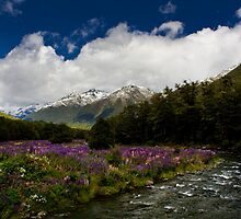 Lupin Valley by Luke and Katie Thurlby