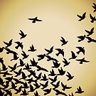 Freedom by Alaina Ellington
