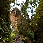 Kea! by Luke and Katie Thurlby
