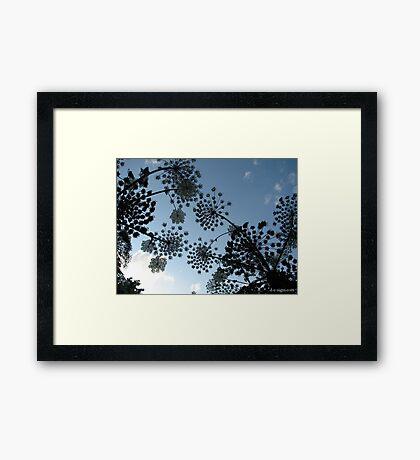 NATURES GIANTS Framed Print