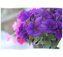 Pretty Purple Petunia Flowers Poster
