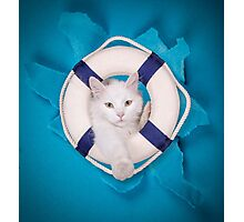 rescue cat Photographic Print
